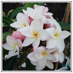 Tropical Plant Nursery Morgan Hill